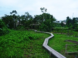Cotton Tree Lodge garden