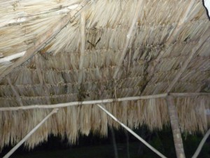 bats in Belize