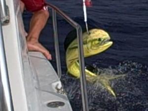 Belize top 10 must do activities belizedragonfly for Deep sea fishing belize