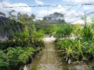 Riverwalk Nursery Belize