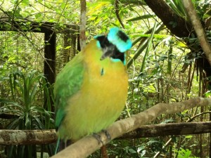 Belize Zoo birds
